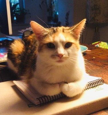 Die Katze Kiki sitzt auf einem Zeichenblock
